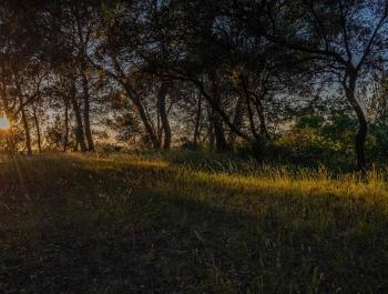 8 - Coucher de soleil sur la pinède du Bastidon